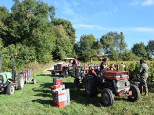 Bauduc September 2014 Harvest