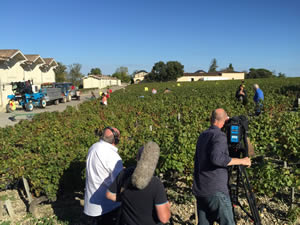 Filming the Cabernet harvest, October 2015