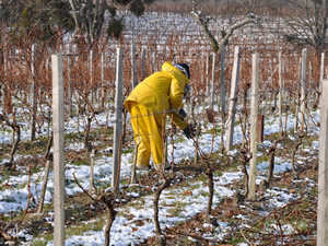 Samira in vines chill