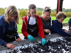 Toms Birthday Harvest in 2015