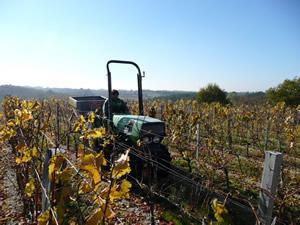 Vineyard work Autumn Fertliser